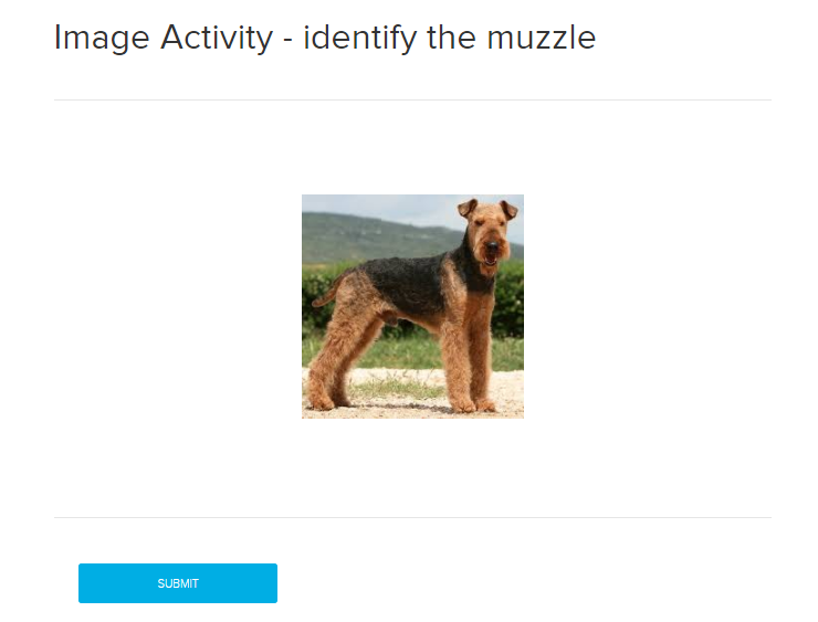 Image quiz activity